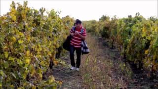 Iubesc Moldova: Геннадий Арабаджи - Молдавия (2010)