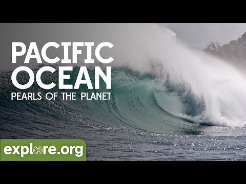 EXPLORE.org Presents The Pacific Ocean