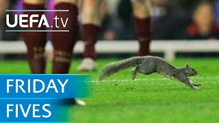 Dogs, cats and squirrels on the pitch: 5 animal pitch invaders