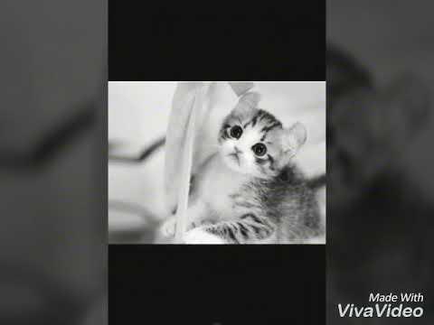 Unduh 94+  Gambar Kucing Lucu Animasi Paling Keren Gratis