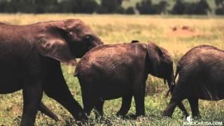 Four Seasons Serengeti - by Joaocajuda com
