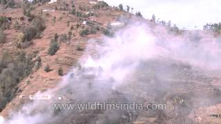 Fire on hill at Jubbal town of Himachal Pradesh