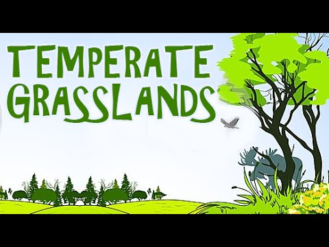 Lands a visit to the grasslands with the kids temperate lands a visit to the grasslands with the kids temperate grasslands part 1 animated youtube voltagebd Choice Image