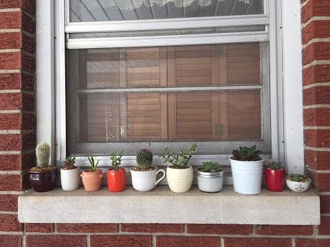Update on My Plants All Made from Recycled/Thrifted Materials Frugal Gardening with Succulents