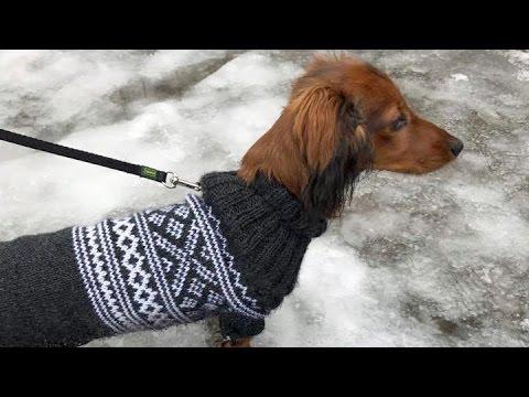 strikkeoppskrift med hundemotiv