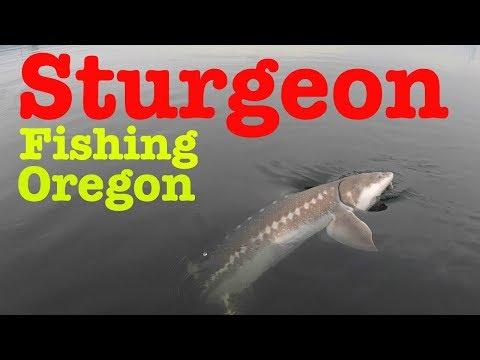 Awesome Sturgeon Fishing - Portland, Oregon!