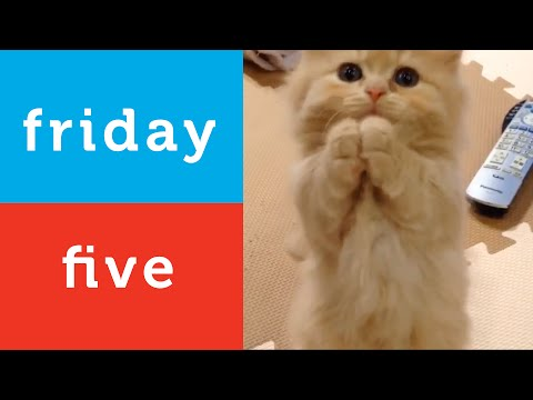Little Bird Plays and More (Petco Friday 5)