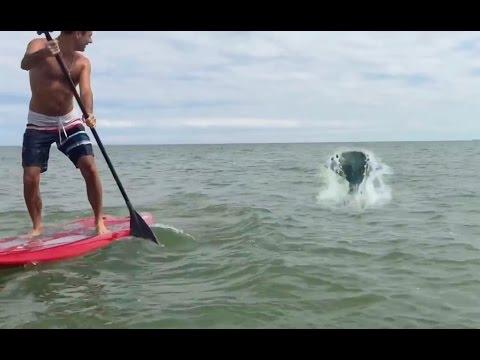 Paddleboarders Capture Real Mermaid Footage