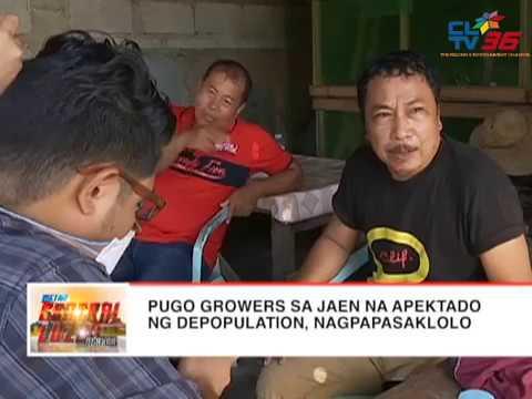 Pugo growers sa #Jaen na apektado ng depopulation, nagpapasaklolo | CLTV36