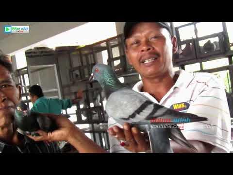Disini Surga Bagi Merpati Lover Di Jawa | Pasar Burung Merpati Ambarawa