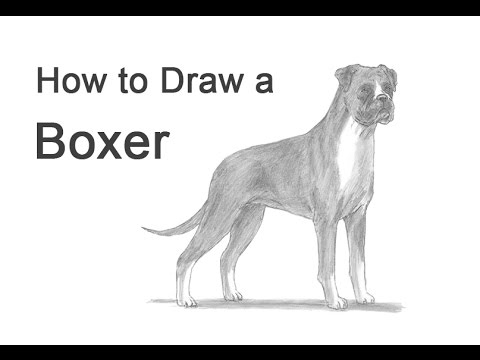 How To Draw A Dog Boxer Youtube