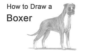 How to Draw a Dog (Boxer)
