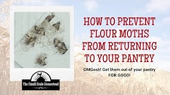 How to Prevent Flour Moths from Returning to Your Pantry