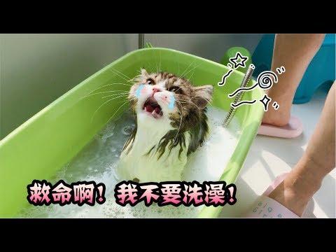 猫咪洗完澡却不愿意吹干, 女主人用毛巾挡住它的眼睛耳朵之后就乖乖就范了!