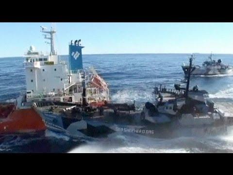 Nuevos enfrentamientos entre balleneros japoneses y ecologistas en aguas del Océano Antártico