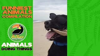 Funny Animal Videos Compilation