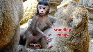 Baixar Bravo! Baby monkey Jumbo he can standing now - Jumbo he look fresh and clear today