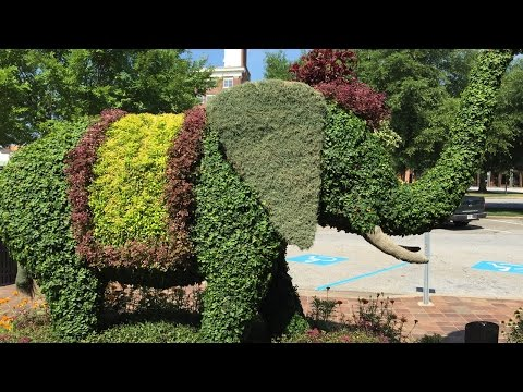 Making It Grow - The SC Festival of Flowers