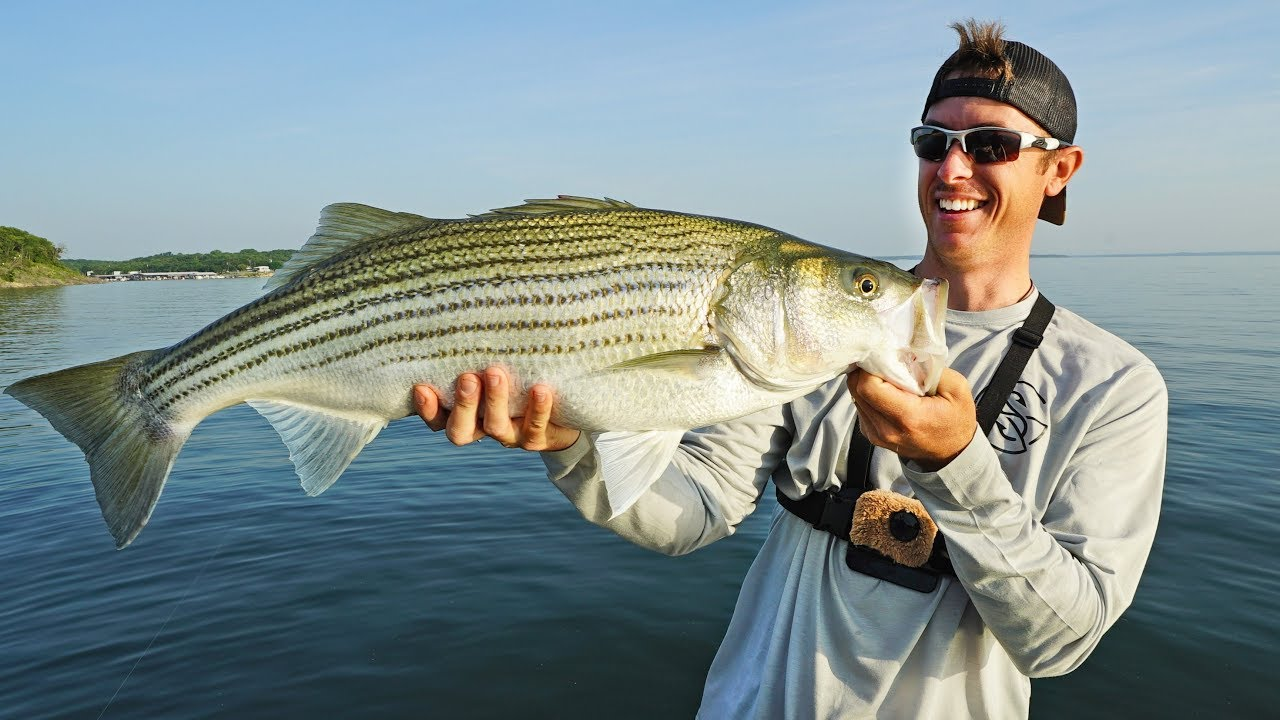 huge-striped-bass-on-bass-rod-new-pb