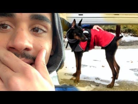 Doberman Gets SUPER Excited - Derek554 Vlog