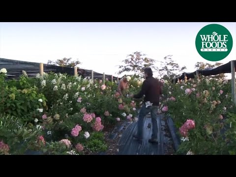 Star Valley Flowers | Buy Local | Whole Foods Market