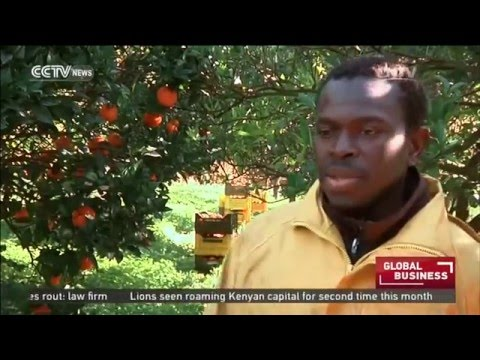 African migrants exploited in Italian farms