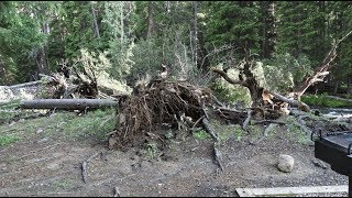 2/5 Storm Damage at Shell Creek Campground 7/8/19 (Bighorn National Forest)