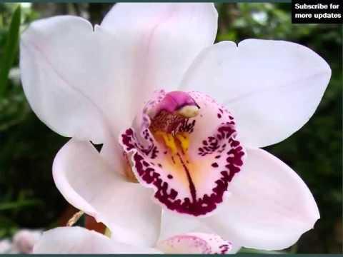 Nature Of Beauty Minooka Il