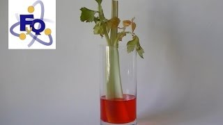 Capilaridad en las plantas