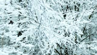 知人から「手袋を買いに」という童話があると聴き、 冬にぴったりのお話...