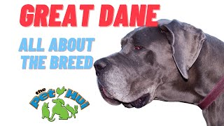 All About  Dog Breed: The Great Dane
