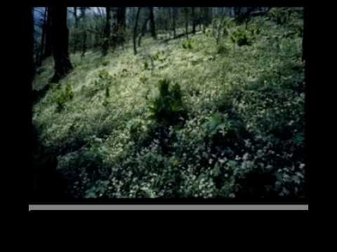 Flowers and Forests of the Appalachian Mountains.mov
