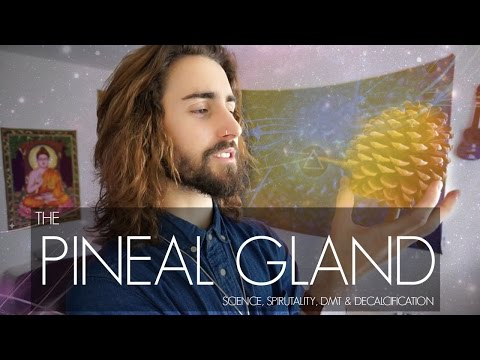 The Pineal Gland (Science, Spirituality, DMT & Decalcification)