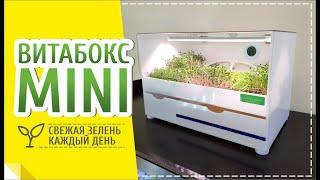 Ферма МИНИ для выращивания микрозелени в ресторанах
