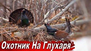 Охота на Глухаря  Документальный фильм ОХОТНИК НА ГЛУХАРЯ.