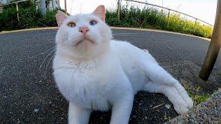港の怒りん棒白猫ちゃん、今日は大人しいと思ったら最後はキレる