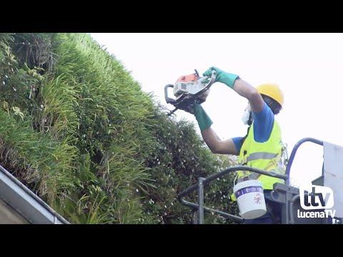 VÍDEO: Los trabajos de mantenimiento en el jardín vertical generan de nuevo malos olores en el centro de la ciudad