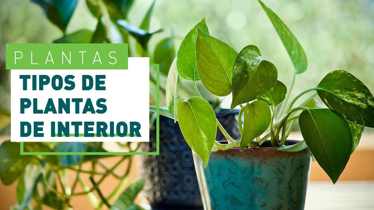 Videos sobre plantas, tips y mucho mas...