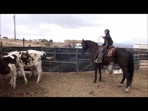 Black Ice 7 yr old GRADE mare