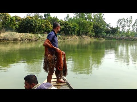 Net Fishing | Catching Fish With Cast Net | Net Fishing in the village (Part-223)