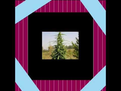 Эпилепсия и конопля курение марихуаны признаки