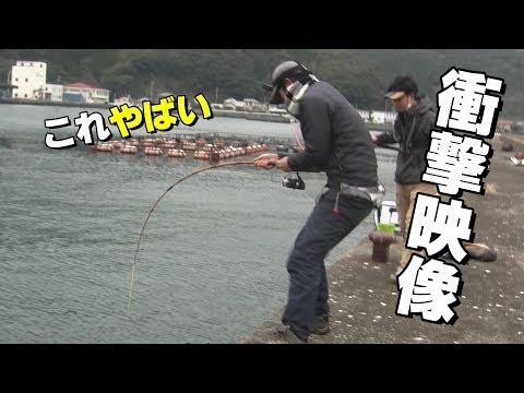 【衝撃】堤防の足元に信じられない生き物が!?Asian sheepshead wrasse fishing