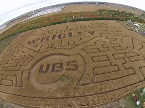 Siegel's Cottonwood Farm Corn Maze