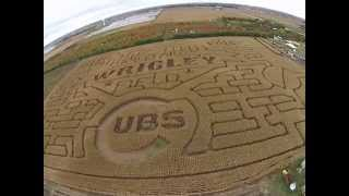 Siegel's Cottonwood Farm Corn Maze
