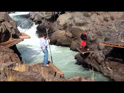 Klickitat River, Washington State, USA Salmon, 9/8/14