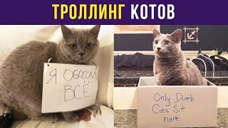 Приколы с котами. Троллинг котов   Мемозг #45