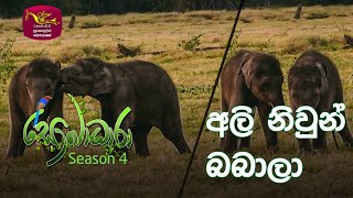 Sobadhara - Sri Lanka Wildlife Documentary | 2020-08-28 | Twin Elephants (අලි නිවුන් බබාලා...) Thumbnail