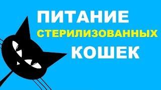 Питание стерилизованных кошек: советы по выбору корма