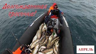 УДАЧНОЕ ОТКРЫТИЕ СЕЗОНА МОРСКОЙ РЫБАЛКИ 2020 SUCCESSFUL OPENING OF THE SEA FISHING SEASON 2020