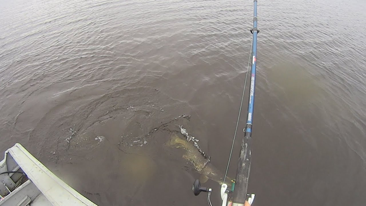 рыбалка на спиннинг на реке десна